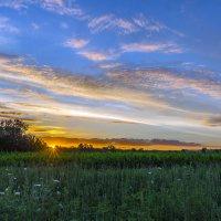 На закате в огороде. :: Владимир