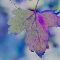 Осенний лист :: Дина Дробина