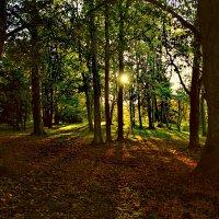 Волшебный лес :: Marina Pavlova