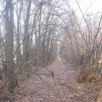 лес, осень :: Smit Maikl