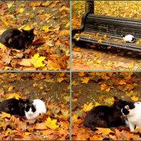 Осенние посиделки :: Нина Бутко