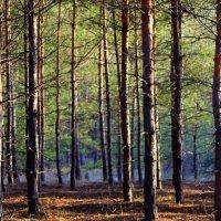 Лес чистый и сухой... :: Валентина ツ ღ✿ღ