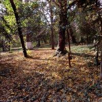 Осень в парке :: Наталья Джикидзе (Берёзина)