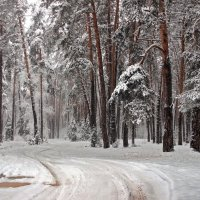 Всю ночь шёл предморозный снегопад... :: Лесо-Вед (Баранов)