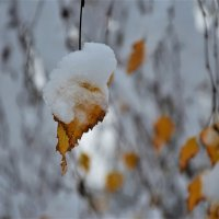 И пришли зима.. :: Полина Гудина