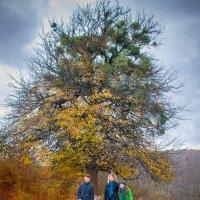 Осень :: Олеся Енина