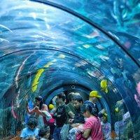 Океанариум и его посетители :: Valeriy(Валерий) Сергиенко