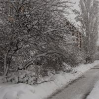 Зима.... :: Сергей К.