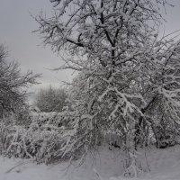 снежная тишина :: павел бритшев