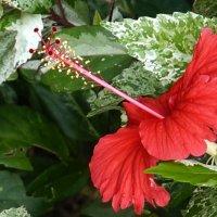 Он  - самый удивительный цветок из всех цветов, которые я знаю....... :: Elena Izotova