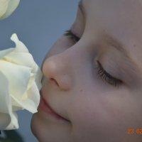 тонкое благоухание белой розы!!! :: Варвара Маевская