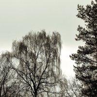 Два цвета поздней осени. :: Анатолий. Chesnavik.