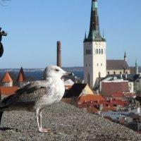 Старый город, как на ладони... :: Алёна Гершфельд