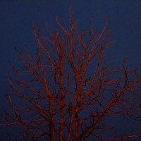 Не кровеносные сосуды :: Андрей Лукьянов