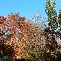 Разноцветная осень :: Татьяна Пальчикова