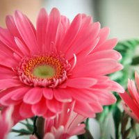 Очарование цветка :: Марина Лукина