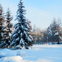 Ноябрь в Сибири :: Владимир Звягин