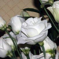 Это не роза!!! :: Владимир RD4HX Сёмушкин
