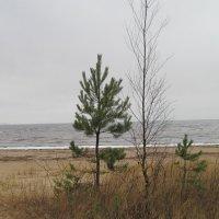 Берег Финского залива. Ноябрь :: Маера Урусова