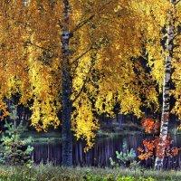 Осенние берёзки у воды :: Aleksander Kaasik
