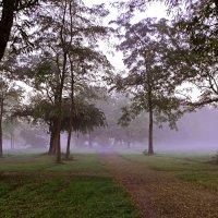 Розовый туман :: Alexander Andronik