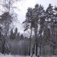 Зимний лес :: Викторина Срыбна