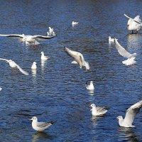 Чайки на озере в городском парке :: Маргарита Батырева