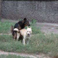 Утренняя зарядка в Год Собаки: иронический спортивный репортаж!... :: Алекс Аро Аро