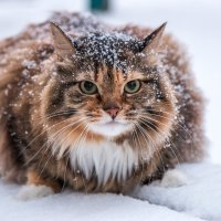 Холодно, однако :: Евгения Голева