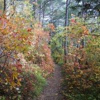 Лесными тропами в горы :: Виктория Попова