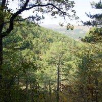 Лес и горы :: Виктория Попова