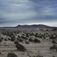 Национальный Парк Паракас, Перу :: Снежана Бесценная