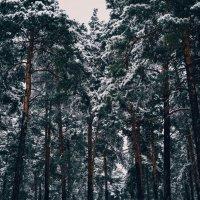 Первый снег :: Юлия Шевцова