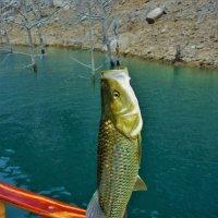 Вот она-рыбка... :: Sergey Gordoff