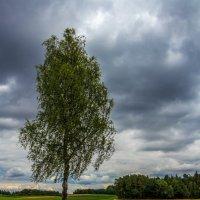 Во поле берёзонька стояла... :: Waldemar F.