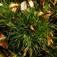 Трава в ноябре :: татьяна