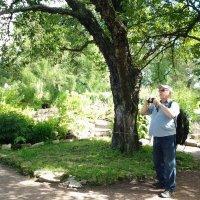 Увлеченный фотограф в ботаническом саду. :: Жанна Викторовна