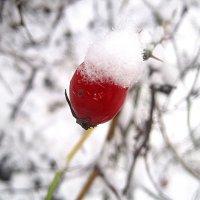 В зимней шапке :: Елена Семигина