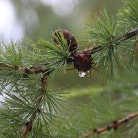 после дождя :: Дмитрий Солоненко