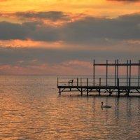 Лебедь и закат :: Александр Довгий