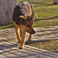 Бездомный пес :: Александр Волков