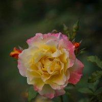 «…В лепестках хранит царица, Тайну нежности, любви…» :: Андрей Нибылица
