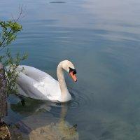 Озеро Блед, Словения :: Alex FA