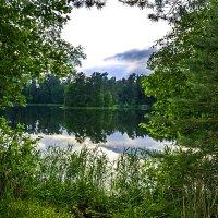 Лесное озеро :: Мария Богуславская