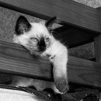 Кошка в размышление о бытие :: Ярослав Адамов