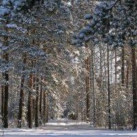 Зима :: Галина Ильясова