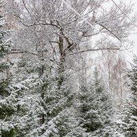 первый день зимы.. :: Надежда Шемякина