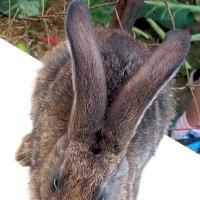 Кролик Вася. :: Елена