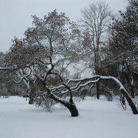 Вот так бы всю зиму.... :: Tatiana Markova