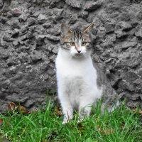Котишка чем-то удивлён... :: Маргарита Батырева